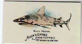 2008 Topps Allen and Ginter Mini World's Deadliest Sharks #WDS3 Bull Shark