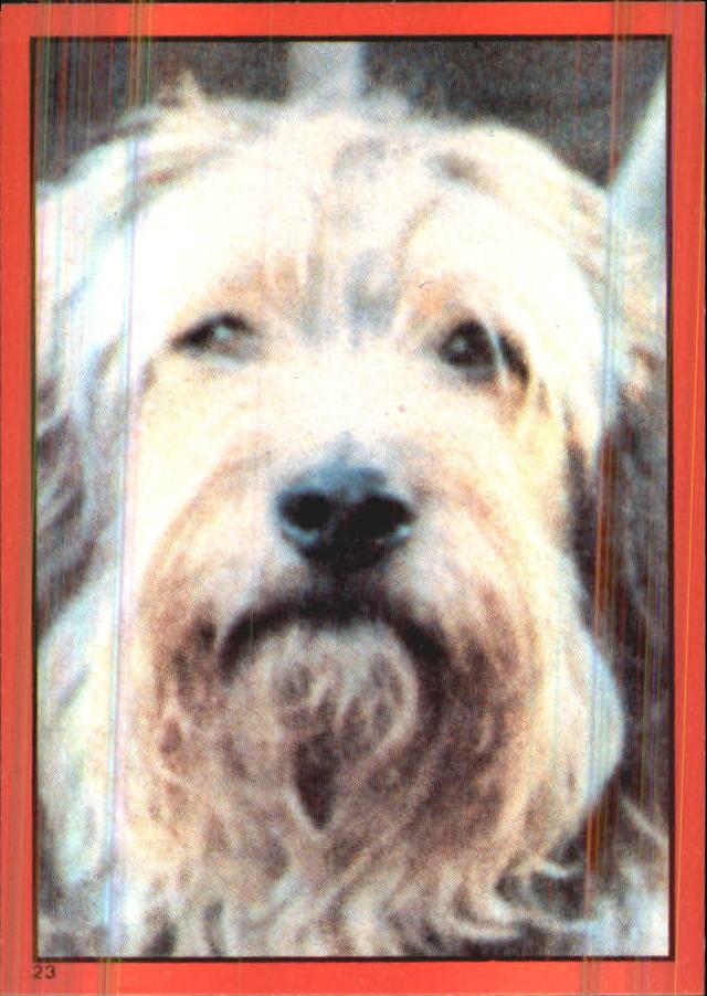 1981 Annie Album Stickers #23 Sticker 23