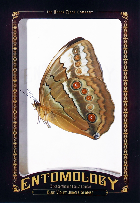 2011-Goodwin-Champions-Entomology-Blue-Violet-Jungle-Glories